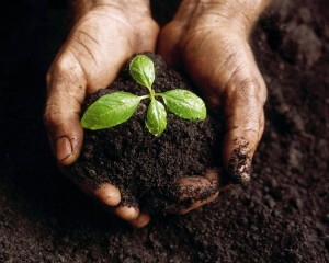 hands_in_compost
